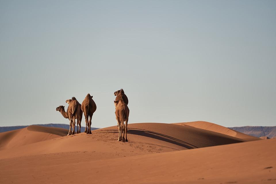 marokko sivatag